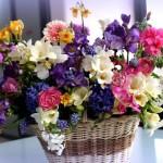 Язык цветов, или какие цветы дарят